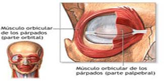 Distonia Botox